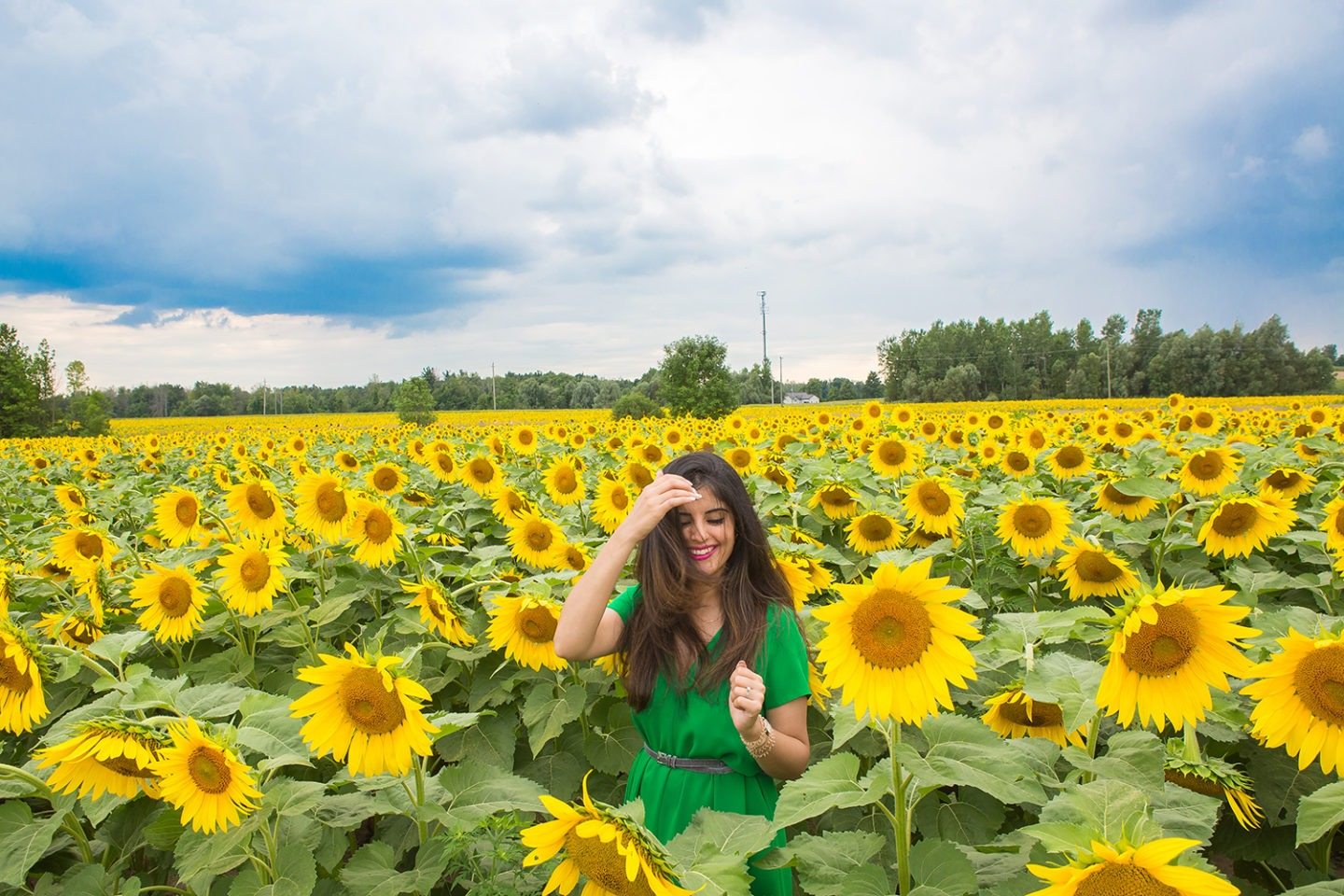 DREAMS & SUNFLOWER FIELDS